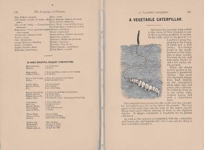 Jefferis, page 170