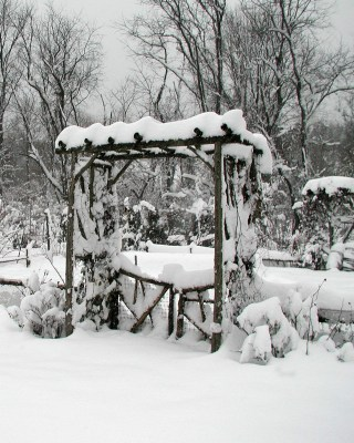 Trellis and snow