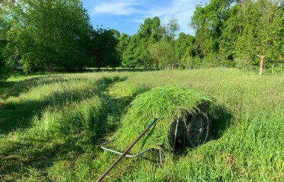 Meadow with cartful of scythed hay