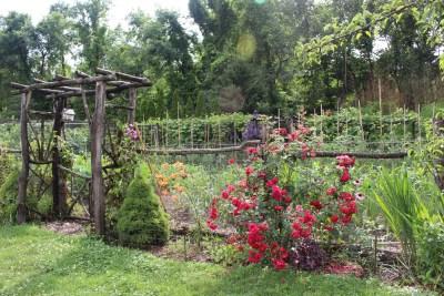 L D Braithwaite rose