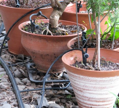 Drip tubes to potted plants