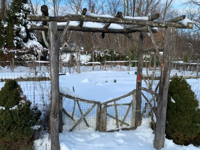 Snow in garden, Dec. 4