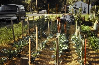 Garden, Madison, 1970s