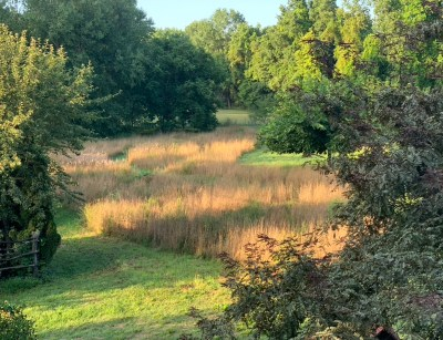 Meadow in September