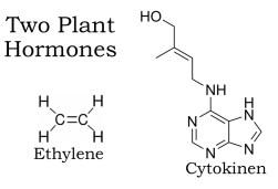 Ethylene diagram