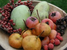 Uncommon Fruits of Fall