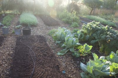 Composted garden beds