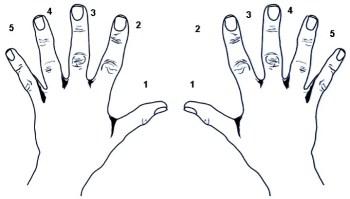 Nummering van de vingers
