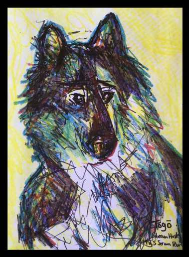 Togo a real dog hero in ink and crayon and watercolor
