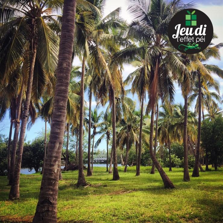 Jeudi Péi - Où est ce que se trouvent ces cocotiers ?