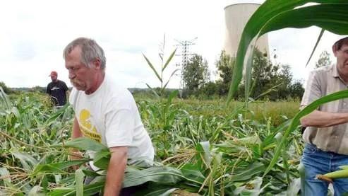 Le leader altermondialiste José Bové participe, le 15 août ,devant la centrale nucléaire de Civaux, à une action de destruction de deux parcelles de maïs OGM par une centaine de faucheurs volontaires.