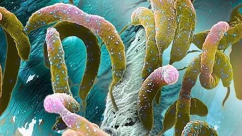 Photo d'une colonie de bactéries d'eau prise en 2008.