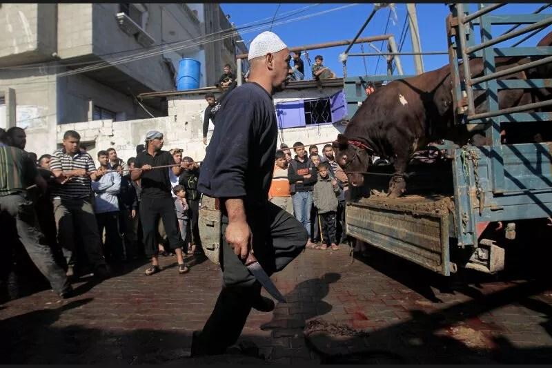 L'Aïd el-Kebir, la plus importante fête de l'Islam, commémore la fidélité du prophète Ibrahim, prêt selon la tradition à sacrifier son fils Ismaïl avant qu'un ange ne lui propose un mouton à la place. Le rituel consiste à sacrifier un animal, comme ici, dans le camp réfugié de Rafah, dans la bande de Gaza.<br /><br /><br /><br />