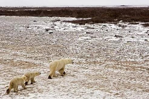 Paysage de toundra au Canada. Si la température moyenne des zones arctiques augmentait de 2,5°C d'ici à 2040, le sous-sol (permafrost) relâcherait de 30 à 63milliards de tonnes de carbone.