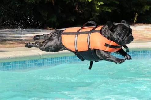 Pour éviter la noyade, il existe sur le marché des gilets de sauvetage adaptés aux chiens qui peuvent permettre d'éviter une noyade.