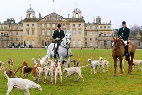 Devant le chateau du duc de Beaufort, le maître d'équipage rasemble les chiens avant le départ pour la chasse. Entre le cavalier et la meute, la connivence est totale. L'entente au sens propre, est absolue.