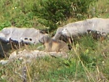 Les Confins marmot