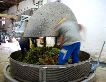 A grape press for making wine/champagne