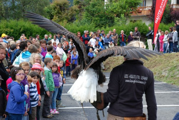 Eagle flying in St Jean de Sixt, France