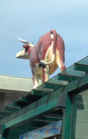 Photo of a cow on a bus stop roof in Annecy, France
