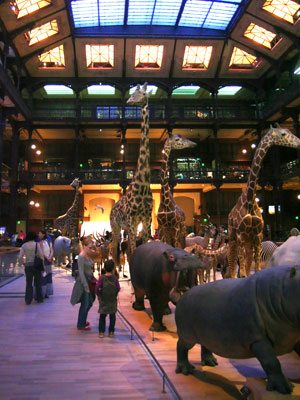 <Photo of the Natural History Museum of Paris. Copyright LeFrancoPhoney France, based in St Jean de Sixt>
