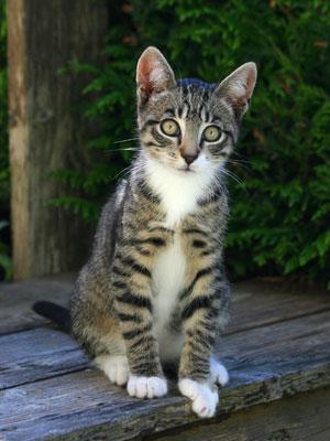 <Photo of Squeak the kitten>