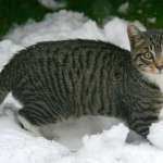 Kitten in snow in St Jean de Sixt, France