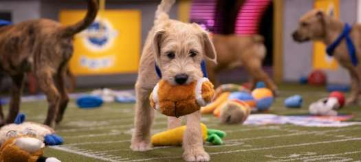 Don't Forget The Best Super Bowl Betting Event: The Puppy Bowl