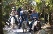 Horse tours Brevard