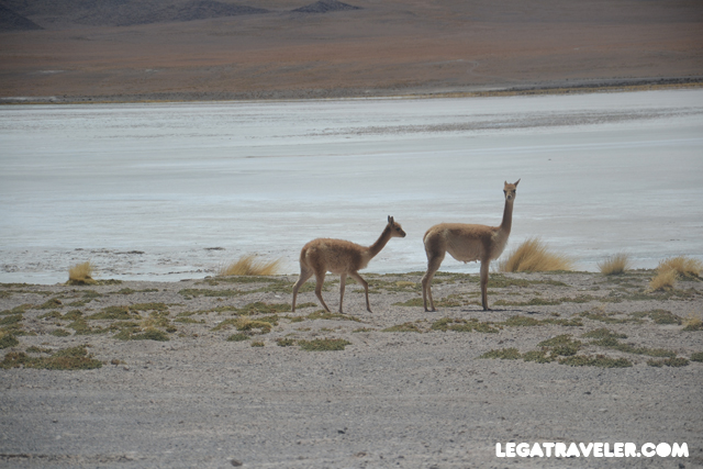 Bolivia_Tour_Salar_de_Uyuni_155