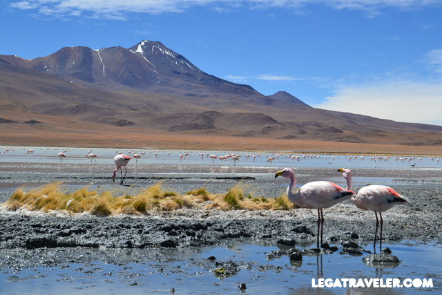 Bolivia_Tour_Salar_de_Uyuni_159