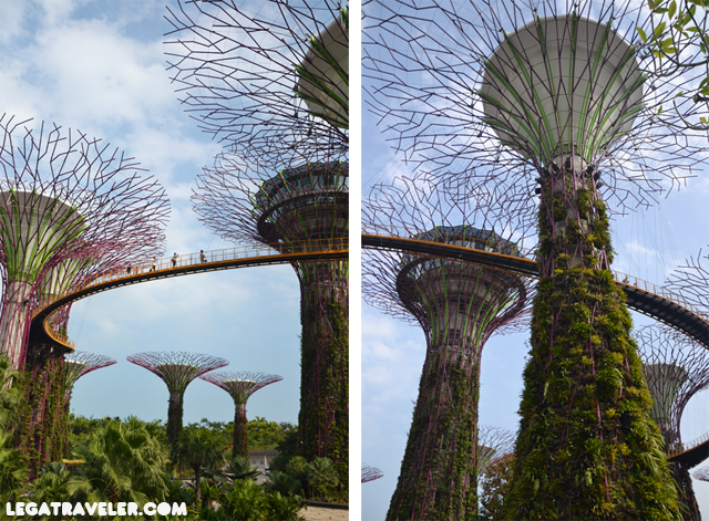 super-tree-grove-arboles-singapur