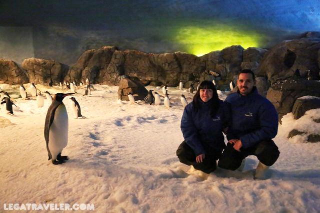 faunia-ecosistema-polar-visita-pinguinos