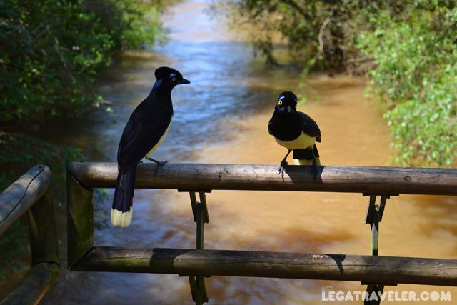 aves-iguazu