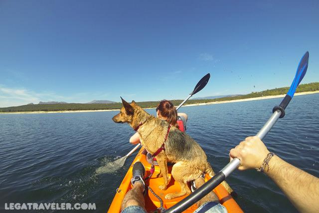 kayak-con-perro-madrid