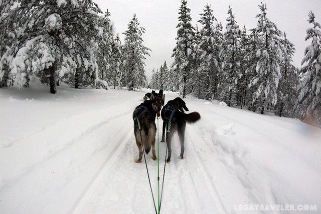 excursiones-con-huskies-rovaniemi-finlandia