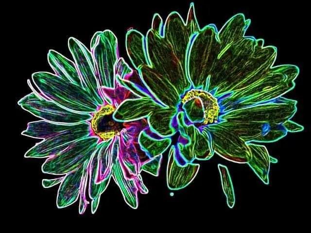 flowers-77486_640