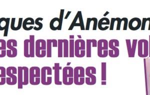anemone-dernieres-volontes-respectees-celebrite-aux-obseques