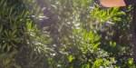"""Laura Smet """"honteuse"""" à Cap Ferret - surprenant complexe de son Raphaël (photo)"""