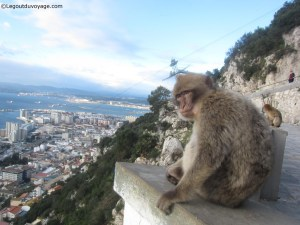 Gibraltar - rocher - singes