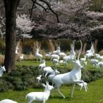 Une visite au zoo de Shanghai