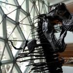 Jurassic Park au Musée d'histoire naturelle de Shanghai