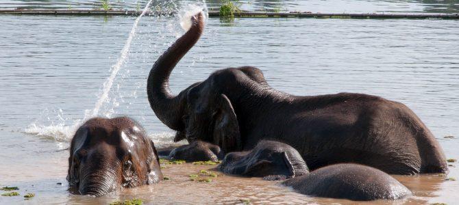 Elephants! (1/2)