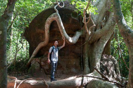 Des racines, mais où cela ?