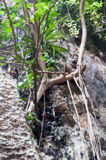 Monkey see?