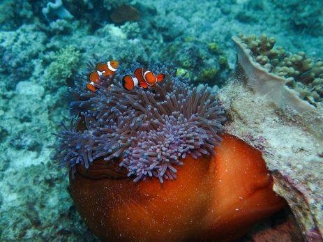 Nemo !
