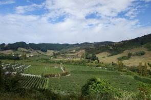 Vignes et vergers - Vineyard and orchards