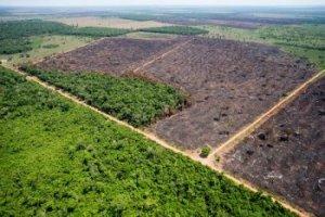 Brésil : les ONG et l'industrie agroalimentaire s'allient pour envoyer à Bolsonaro des mesures contre la déforestation — André Borges