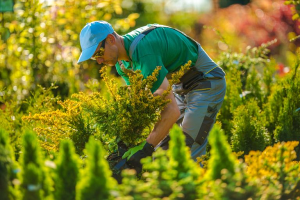 Landscape Contractors in Baltimore, Maryland