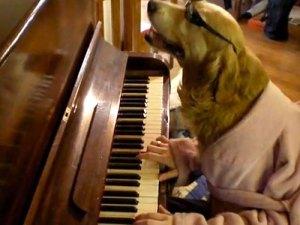 dog_piano2